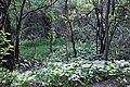 Dense bush along the walking trail (20564362300).jpg