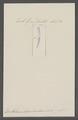 Dentalium translucidum - - Print - Iconographia Zoologica - Special Collections University of Amsterdam - UBAINV0274 081 10 0023.tif