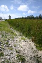 Diego Garcia Cattail Marsh