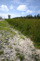 Diego Garcia Cattail Marsh.png