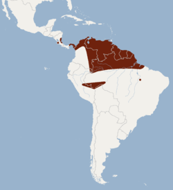 Distribution of Cyttarops alecto.png