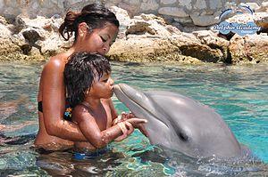 English: Dolphin Encounter
