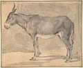 Donkey MET DP800454.jpg