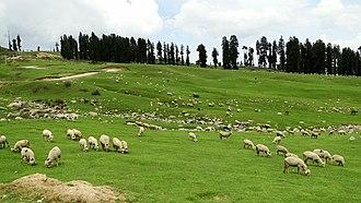 Doodhpathri - Image: Doodhpathri southwest Jammu Kashmir India (7)
