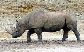 Джаван носорог 5 рублей 1853 года цена