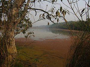 Lakhimpur, Uttar Pradesh - Image: Dudhwa River Side