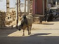 Dwaraka and around - during Dwaraka DWARASPDB 2015 (260).jpg