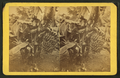 Dwarf bananas, from Robert N. Dennis collection of stereoscopic views.png