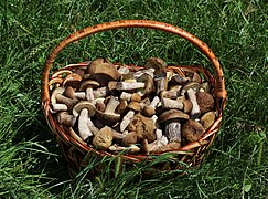 Edible fungi in basket 2018 G1.jpg