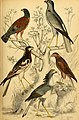 Edinburgh journal of natural history and of the physical sciences (1835) (20978766059).jpg