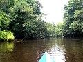 Edisto River - panoramio - KenB.jpg
