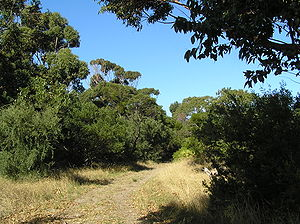 Edwards Point (Victoria) - Woodland walking track in the reserve