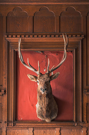 mounted stag head, 10 pointer