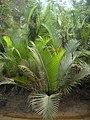 Ekosistem rawa Bangka.jpg
