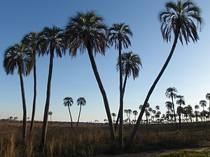 El Palmar National Park - Image: El Palmar Plains