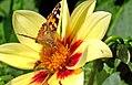 Eldorado für Insekten.jpg