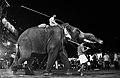 Elephant by Joseph Lazer.jpg