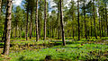 England - English Summer Forest (7183013032).jpg