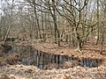 Epping Forest, small pond - geograph.org.uk - 1214190.jpg