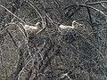 Eurasian Spoonbills (25823634256).jpg