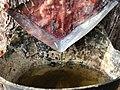 Explotación de resina en el pinar de Peñausende 6.jpg