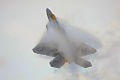F22A Raptor - RIAT 2008 (2668797210).jpg