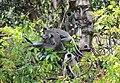 FLora and fauna of Chinnar WLS Kerala (61).jpg