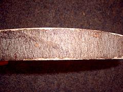 Fagus sylvatica bark.jpg