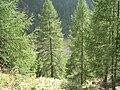Fale - Trentino Alto Adige - 28.jpg