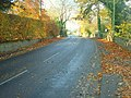 Fallen Leaves - geograph.org.uk - 1038854.jpg