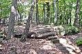 Felsenmeer, steinernes Meer im Naturpark und Biosphärenreservat Pfälzerwald - panoramio (5).jpg