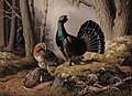 Ferdinand von Wright - Capercaillies courting - A II 842 - Finnish National Gallery.jpg