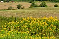 Field and Flower (235844592).jpg