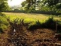 Field near West Ogwell - geograph.org.uk - 905623.jpg