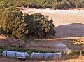 Fields of harvested hay, Monterosi countryside in Latium.jpg