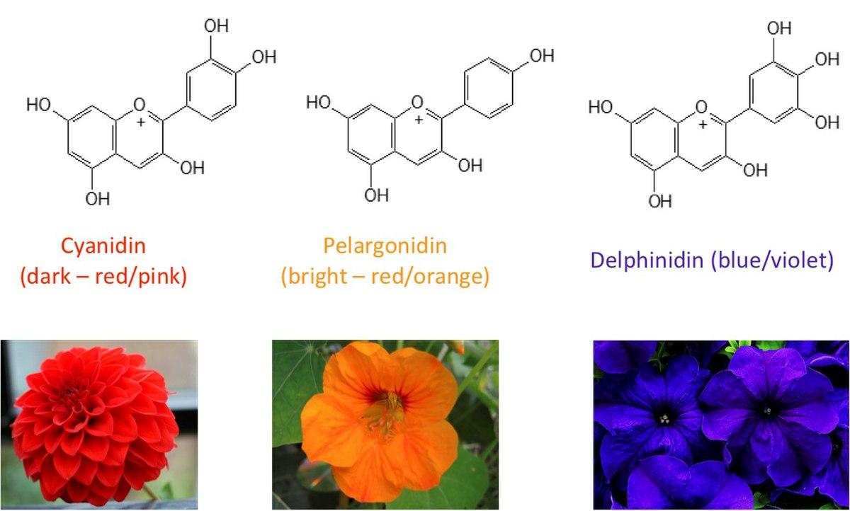 Basics Of Blue Flower Colouration Wikipedia