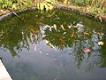 Fish Pond in The Secret Garden, Eden Villa Park, Bachelors Walk, Portadown - geograph.org.uk - 587964.jpg