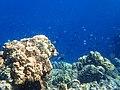 Fish swarm off Coron Island (2).jpg