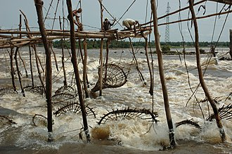 Putcher fishing - Conical baskets on a wooden frame are also used elsewhere; here, Wagenya, to catch the fish thrown downstream by rapids at the Boyoma Falls (aka: Stanley or Kisangani falls) on the Lualaba River, near Kisangani in the Democratic Republic of the Congo. As in the UK, fishing spots are inherited.