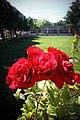 Five City Blocks Smell Of Roses - panoramio (6).jpg