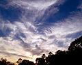 Flickr - Nicholas T - Mares' Tails.jpg