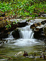 Flickr - Nicholas T - Welsh Mountain Nature Preserve (1).jpg
