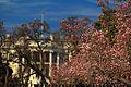 Flickr - Shinrya - Fall Blossom outside the White House.jpg