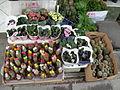 Flickr - brewbooks - Cactus for sale in Ankara.jpg