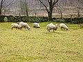 Flock on Snake Hill - panoramio.jpg