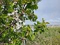 Flora, Osieki, koszalińskie (2).jpg