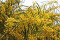 Flora della Sardegna 221 (03).JPG