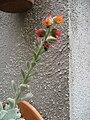 Flores-8.jpg