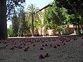 Flores - panoramio (14).jpg