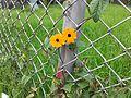 Flores con una barra de metal.jpg